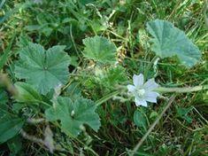 5 kiváló gyógynövény, ami segít az allergia kezelésében | Sokszínű vidék Allergies, Health Fitness, Herbs, Plants, Gardening, Therapy, Lawn And Garden, Herb, Plant