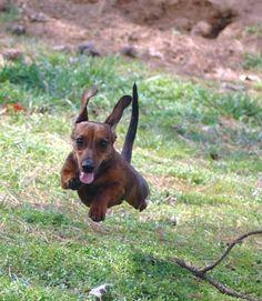 run, puppy, run!