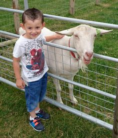 Meeting the resident Goats at Farmer Palmer's Farm Park | Poole | Dorset UK  Days out for kids