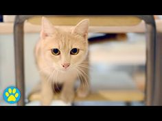 5 Easy Cat Toys Under 3 Minutes - YouTube