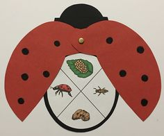 Redesigned ladybug includes three body parts, life cycle chart, and wings! Preschool Lesson Plans, Toddler Activities, Preschool Activities, Learning Websites For Kids, Kids Learning, Science Crafts, Science For Kids, Crayon Themed Classroom, Cycle Pictures