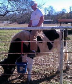 riding norm pet bull trail safe cow