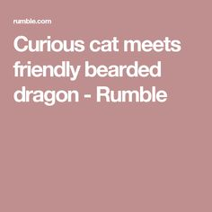 Curious cat meets friendly bearded dragon - Rumble