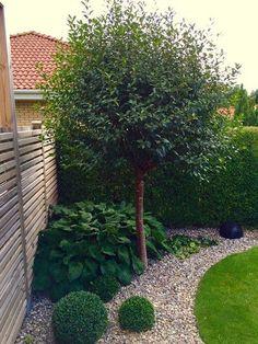 Modern Garden Design, Backyard Garden Design, Backyard Landscaping, Landscape Design, Backyard Ideas, Back Gardens, Small Gardens, Outdoor Gardens, Garden Cottage