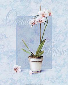 T.C.Chiu - Orchid