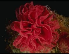 Coral reefs are underwater structures made from calcium carbonate secreted by corals. Coral reefs are colonies of tiny living animals found in marine waters that contain few nutrients. Most coral reefs are built from stony corals, which in turn consist of polyps that cluster in groups. The polyps are like tiny sea anemones, to which they are closely related. Unlike sea anemones, coral polyps secrete hard carbonate exoskeletons which support and protect their bodies