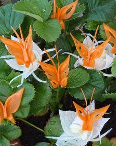fleurs et papillons originaux en carottes et oignon