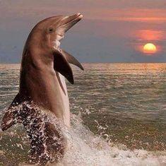 #Serrurier #Maurepas http://serruriermaurepas.lartisanpascher.com/ Beautiful dolphin