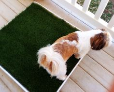 DIY porch potty tutorial. Interesting, I wouldn't have thought to put kitty litter under the grass...
