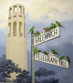 The Wild Parrots of Telegraph Hill, Coit Tower, San Francisco  I'd like to hike there!!!