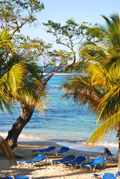 """The """"Tree of Good and Plenty""""...Ocho Rios, Jamaica.  My photo.  #jamaica, #photography, #travel, #beach"""