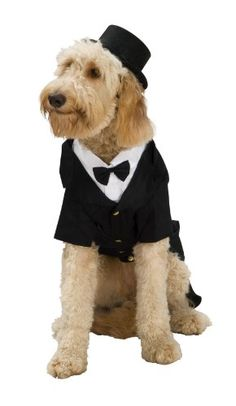 Dapper Dog Tuxedo Pet Costume, Large - http://www.thepuppy.org/dapper-dog-tuxedo-pet-costume-large/