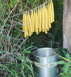 Sustainable Living in August: Hand-dipped Beeswax Candles