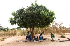 iDE UK is an NGO promoting farming and equality in rural communities across the globe. These people are resting under a tree after a hard day of work in the blazing heat.  http://www.ide-uk.org/