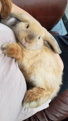 Not all rabbits are snuggly but Maisy loves being cuddled! Cute Animals With Funny Captions, Cute Animal Memes, Cute Baby Bunnies, Funny Bunnies, Cute Bunny Pictures, Kawaii, Fluffy Animals, Cute Little Animals, Bunny Care