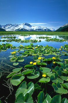 tundra wetlands ~ Chugach National Forest, Alaska So many cool places to visit in this country! Gorgeous #pinadream