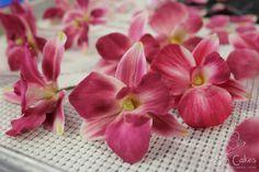 Gum Paste Sugar Dendrobium Orchid