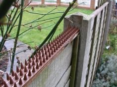 Shop Home Security Fence Prikka Strip. Free delivery on eligible orders of or more. Outdoor Projects, Home Projects, Outdoor Ideas, Decks, Cat Fence, Safety And Security, Security Gadgets, Personal Security, Home Defense
