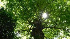 Ouro verde da Amazônia: o dinheiro que vem da floresta em pé
