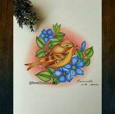 Wren from flower of the year colouring book