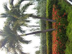 Flower wall in plantana