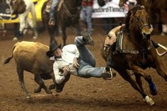 Cole Edge leaps from his horse to wrestle with a steer during the 82nd annual San Angelo Stock Show and Rodeo