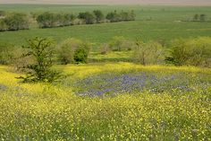 Blue Bonnets, Photo And Video, World, Photos, Travel, Outdoor, Look Alike, Flowers, Outdoors