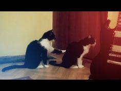 Katze entschuldigt sich bei Katze | Webfail - Fail Bilder und Fail Videos
