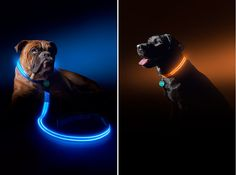 Poochlight LED Light Up Collars and Leads keep your dogs safe on night runs