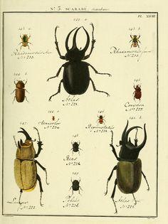 Scarabe. Entomologie, ou, Histoire naturelle des insectes t.7 A Paris :De l'Imprimerie de Baudoin,1789-1808. Biodiversitylibrary. Biodivlibrary. BHL. Biodiversity Heritage Library
