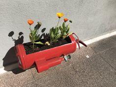🤔 old fire extinguisher.... Seems pretty nice as flowerpot...!
