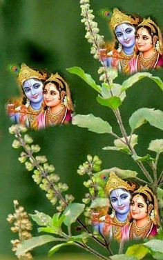 Lord Krishna And Radha Rani Beautiful Couple and Tulasi maa Ganesh Images, Lord Krishna Images, Radha Krishna Images, Radha Krishna Love, Krishna Photos, Jai Shree Krishna, Radhe Krishna, Lakshmi Images, Lord Vishnu Wallpapers