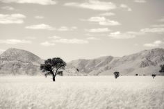 Powerful, photographs of solitary trees captured within the composition of a landscape. This beautiful collection of prints demonstrates the undeniable impact of simplicity. This print is available for purchase in several different sizes from 60cm to 120cm wide.  #artphotographygallery #sepia #art #martinosner #photography #fineartprints #gallery #africa Fine Art Photography, Fine Art Prints, Composition, Photographs, Africa, Trees, Landscape, Gallery, Beautiful