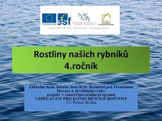 Rostliny našich rybníků 4.ročník Základní škola Jakuba Jana Ryby Rožmitál pod Třemšínem Inovace a zkvalitnění výuky projekt v rámci Operačního programu. Education, Teaching Ideas, Cuba, Educational Illustrations, Learning, Onderwijs, Studying