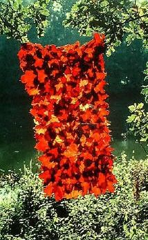 Andy Goldsworthy - could do indoors with glue as stained glass?