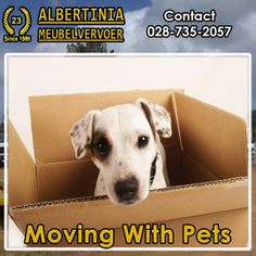 Learn the best tips for moving with pets across the country here. Moving tips are broken down by types of pets such as dogs, cats, and exotic pets. Moving With A Dog, Moving Day, Moving Tips, Hamsters, Pet Friendly Apartments, Moving Services, Pet Services, Exotic Pets, Pet Care