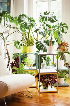 Plantas para interiores - Plantas na decoração