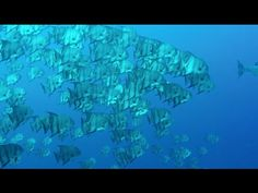 Diving Cornwall - YouTube