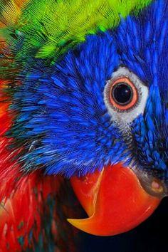 Vibrant bird