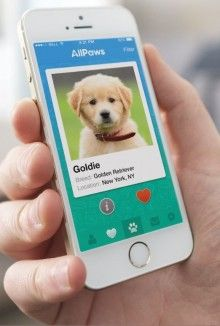 Swipe Right For Unconditional Love: App Pairs You With Adoptable Pets
