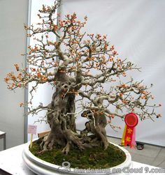 Guangzhou Penjing (Bonsai) Exhibition