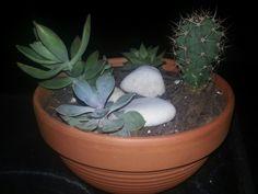 Indoor kaktuz