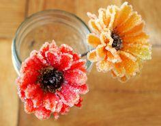 how to grow borax crystal flowers