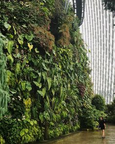 Now that's what you call a green wall  #HaarkonGreenhouseTour