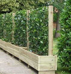 alternative to fences. Would be great for a vegetable garden when you only have a little space with sun. living fence- keep the chickens from the garden~ I was actually just thinking of doing this because we need a new garden fence! Backyard Fences, Garden Fencing, Garden Landscaping, Garden Beds, Backyard Privacy, Privacy Planter, Planter Garden, Garden Walls, Garden Privacy