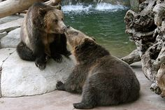 """""""Brotherly Love"""" by Penny Hyde, via Flickr."""