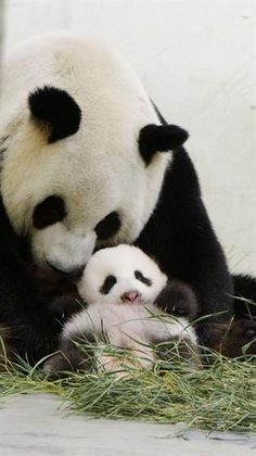 Two-month old Yuan Zai // This is so precious it brings tears to my eyes...