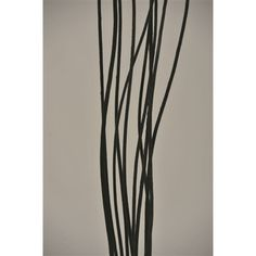 Black Velvet Curly Willow 4ft BULK (120 branches) [566-573670 Black Curly Willow] : Wholesale Wedding Supplies, Discount Wedding Favors, Party Favors, and Bulk Event Supplies