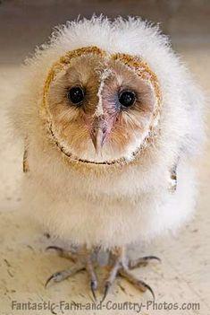 Baby owl, so cute