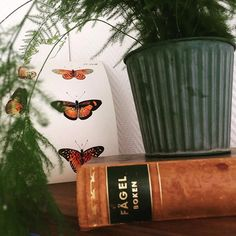 Vintage swedish bird book and poster showing butterflies from Sierra Leone!
